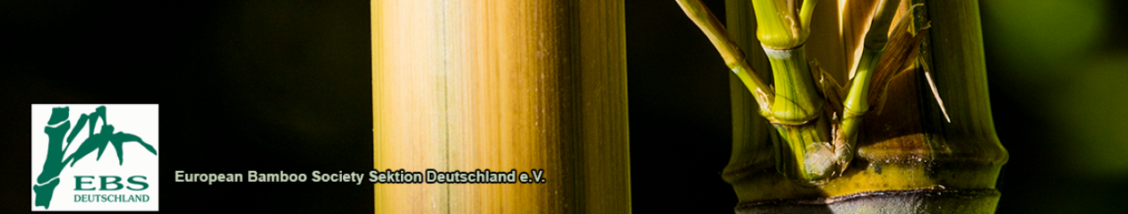 Bambus Kultur Bambus Deutschlandde